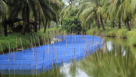 agriculture and aquaculture